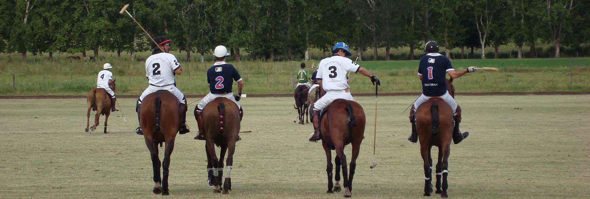 Learn Spanish and play Polo