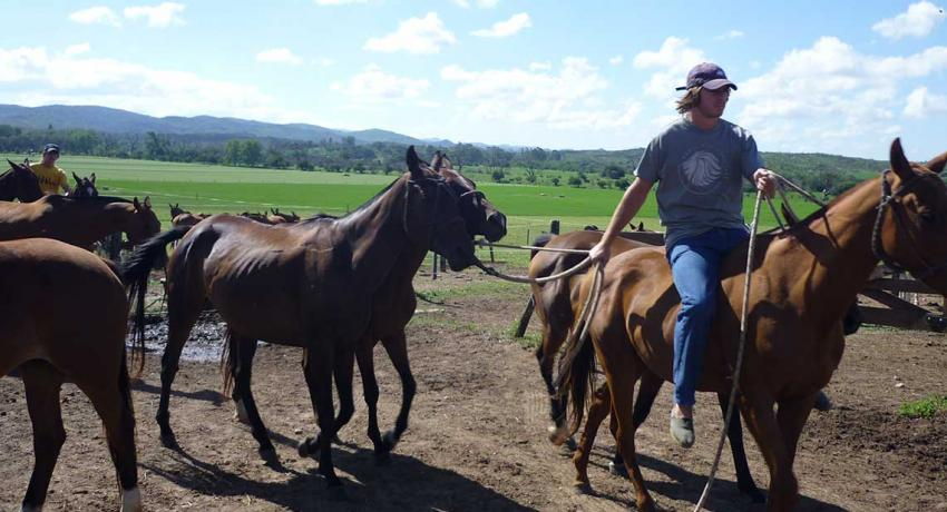 Moving daily the polo ponies